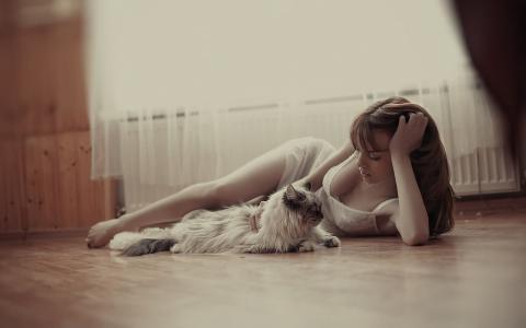 女孩,说谎,猫,美丽