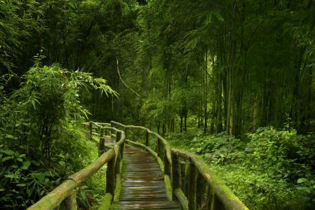 竹,美丽,性质,绿色背景