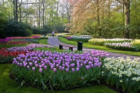 库肯霍夫利瑟,荷兰,自然,国家公园,郁金香,景观