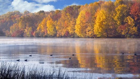 秋天,池塘,美丽