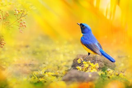 世界鸟类,台湾鸟,海棠,摄影师,陈逸飞,朴奕光