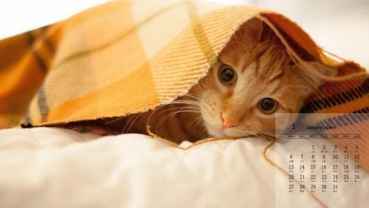 2020年可爱的小猫咪1月日历