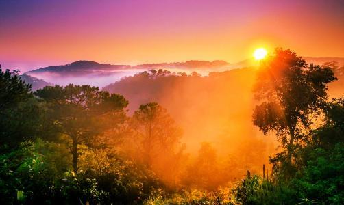 自然,景观,森林,山,雾,日落