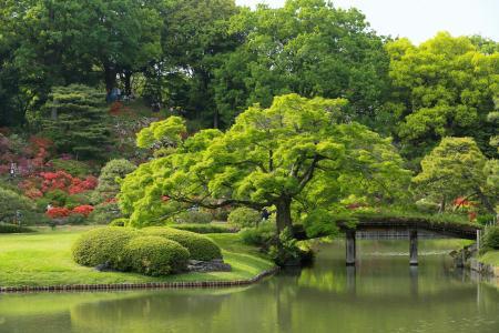 花园,池塘,东京,日本,Rikugien花园,树木,大自然