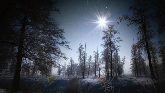 冬天,树木,雪,夜晚,明星