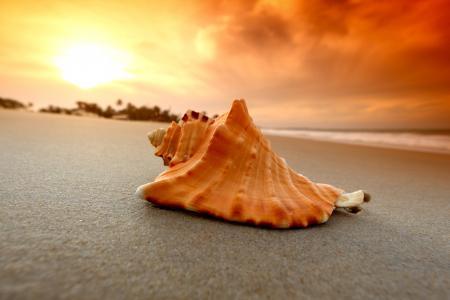 esoc,沙滩,贝壳,海