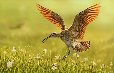 绘画,赞成主题,世界的鸟,自然,花,春天,艺术,工作