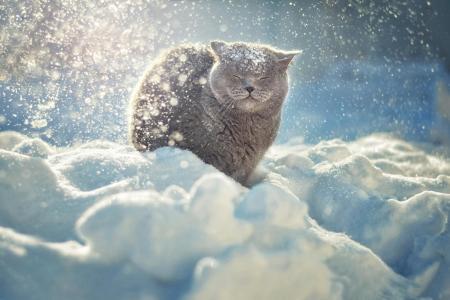 kotyara,雪,冬天