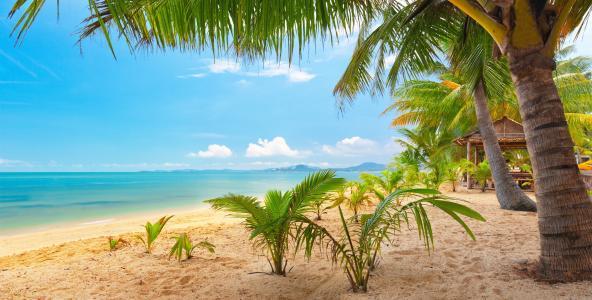 自然,热带地区,海岸,加勒比海,景观
