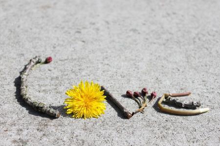 小树枝,蒲公英,沥青,题字,爱,爱