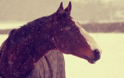 马,动物,冬天,雪,壁纸,背景,枪口,马