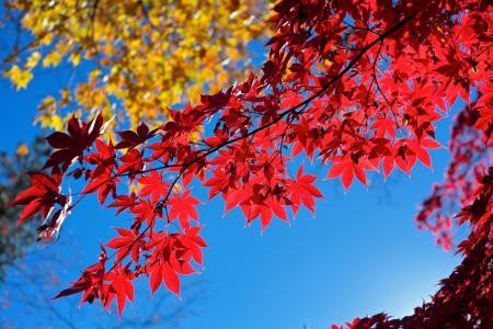 天空,分支,叶子,秋天
