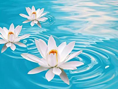 水,蓝色,百合,白色