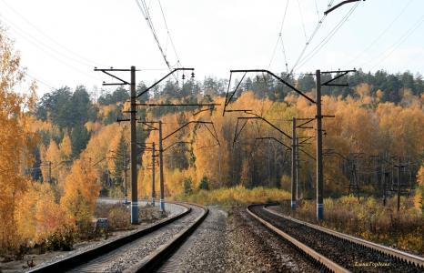 秋天,森林,铁路,轨道,铁路,见面