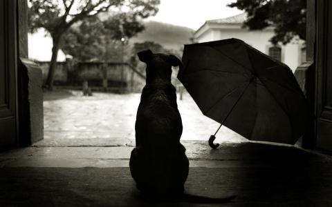 狗,阴影,雨