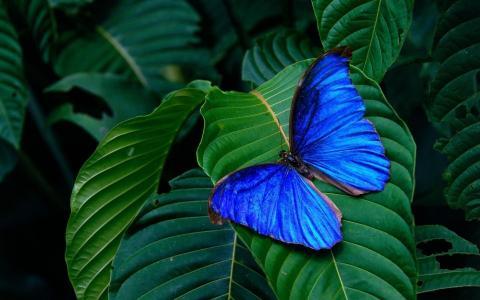 蝴蝶,热带,热带,丛林