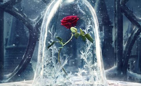 玫瑰,幻想