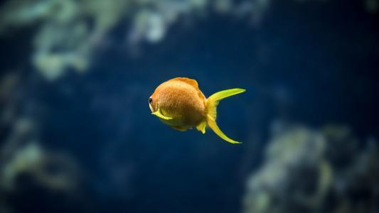 鱼,水族馆,散景
