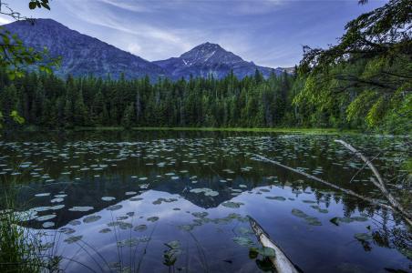 美国,公园,湖,山,森林,景观,约翰湖冰川,人类发展报告,性质