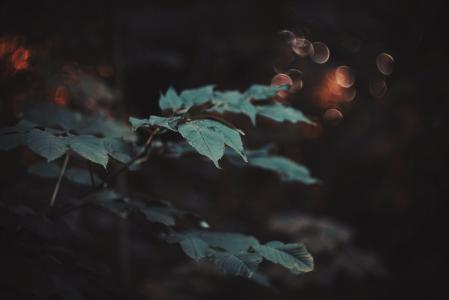 宏,植物,性质,叶子