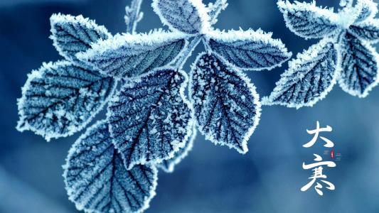 大寒节气霜叶风景