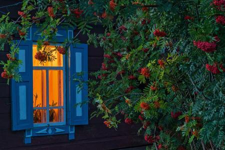 在窗口的花揪,阿尔泰,村庄,修剪,百叶窗,由Pavel Filatov
