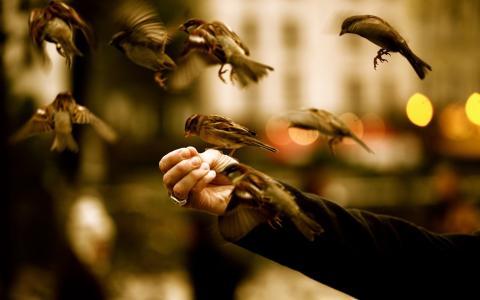 鸟,麻雀,手,戒指,耐力