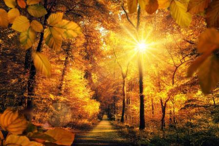 性质,秋季,公园,树,胡同,叶子,太阳