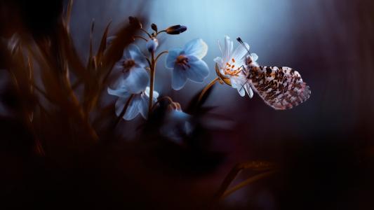 梦幻唯美的蝴蝶