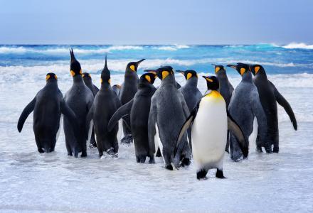 企鹅,鸟,水,洗澡