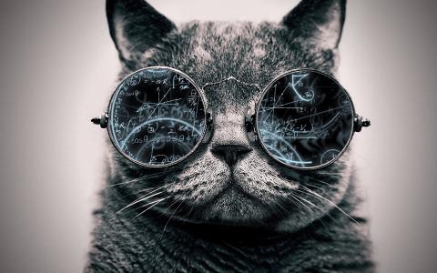 猫,眼镜,英国,图像,创意