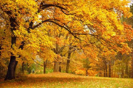 公园,秋天,森林,树木,林间空地