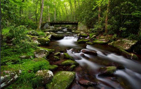 密集的,森林,树木,绿化,美丽,河流,溪流,石头,苔藓