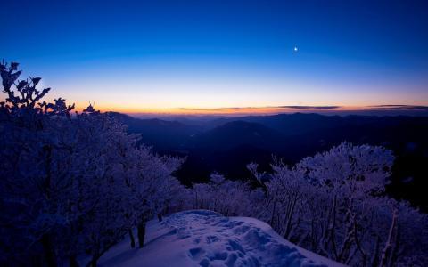 日落,树木,雪,冬天,晚上