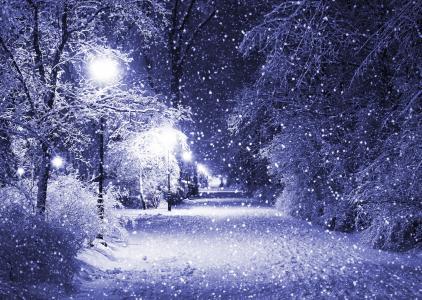 冬天,树木,雪,晚上