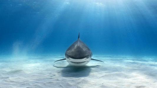 水下,鲨鱼,海洋