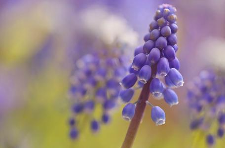 鲜花,美容,花卉,背景,花瓣,鲜花的世界