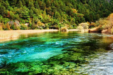 中国,河流,公园,森林,九寨沟,国家公园,自然