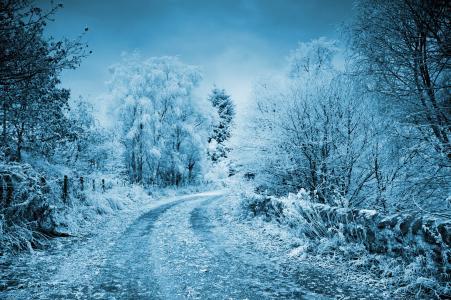 冬天,雪,白霜