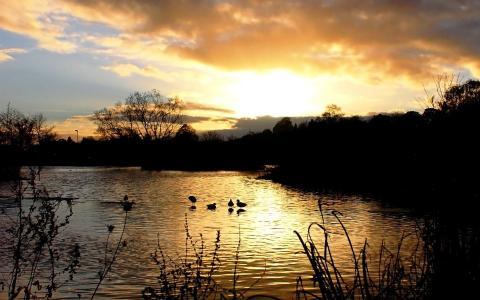 黄昏,湖,鸭,芦苇