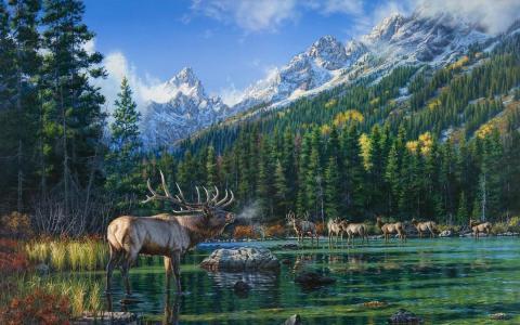 图片,山,森林,鹿