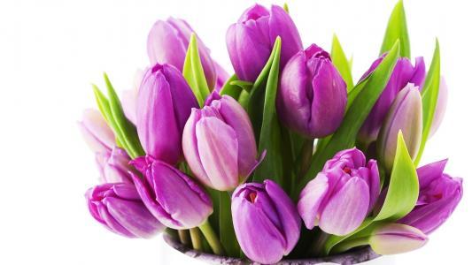 美丽,花卉,丁香,郁金香,花束,鲜花