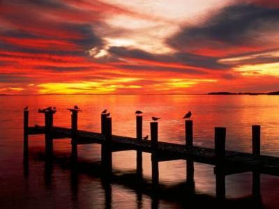 桥,海鸥,水,日落