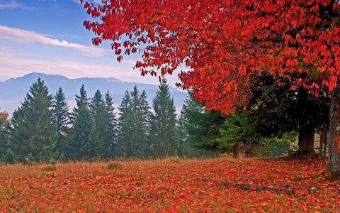 秋天,颜色,树木,山,叶子,草