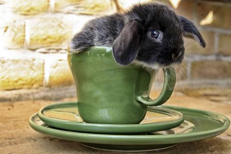 杯子,兔子,飞碟,小