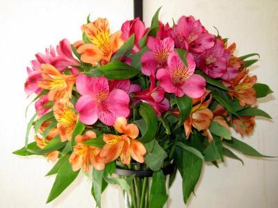 鲜花,alstromeria,性质,花束,花卉