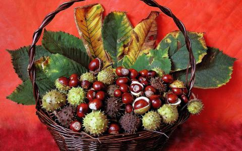 栗子,叶子,篮子,背景,秋季静物
