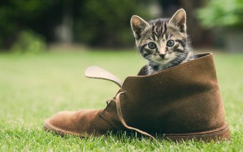猫,草,鞋,绿党,脸,小猫