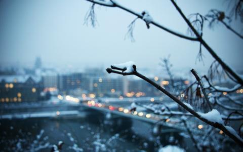 雪,城市,分支机构