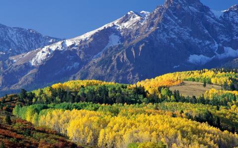 登上sneffels,科罗拉多州,性质,山,秋季,森林,树木,叶子,天空